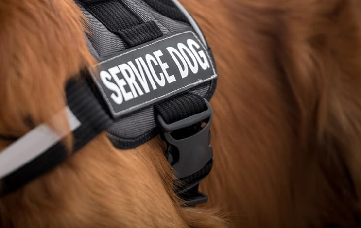 Traumatic Brain Injuries: The Role of Service Dogs As Part of A Support Network