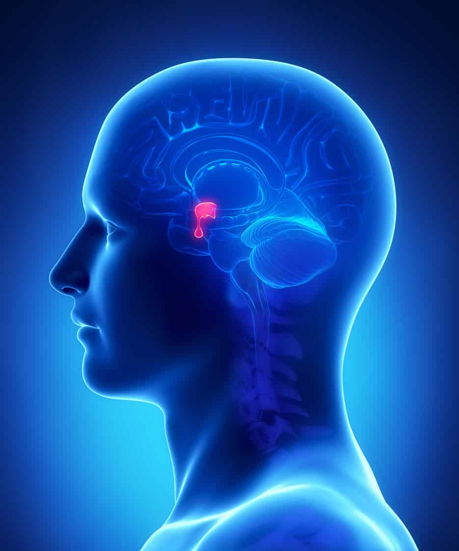 What Are Pituitary Brain Injuries, How Are They Diagnosed, and What Treatment is Available?